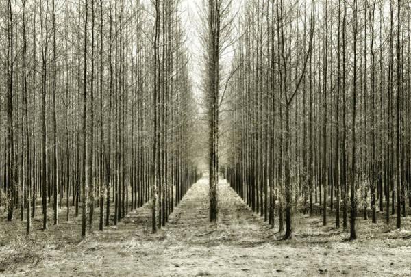 Astoria Photograph - Trees In A Row by Www.jodymillerphoto.com