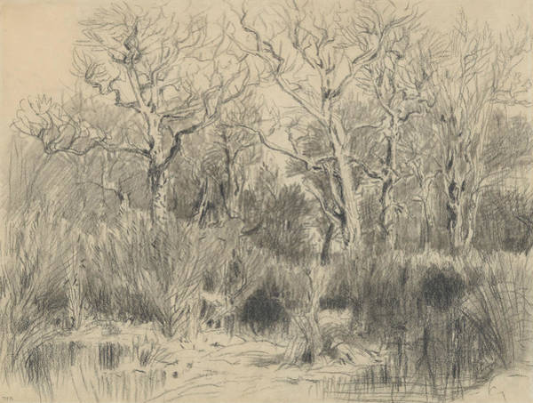 Drawing - Trees In A Thicket by Theodore Rousseau