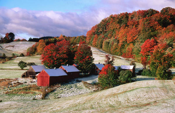 Vermont Photograph - Trees In Autumn At Jenne Farm With by John Elk Iii