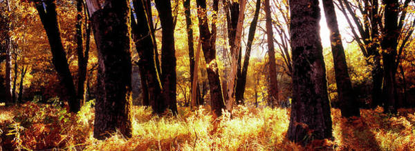 Wall Art - Photograph - Trees In Autumn by Bob Stefko