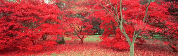 Wall Art - Photograph - Trees In Autumn, Gloucestershire, Uk by Peter Adams