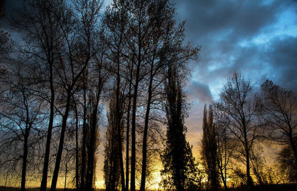 Bluehour Photograph - Trees In Blue Hour by Monte Arnold