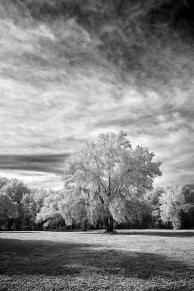Photograph - Trees In Florida by Jon Glaser