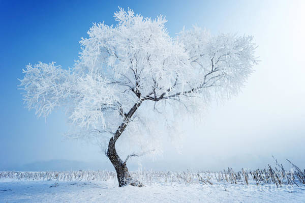 Wall Art - Photograph - Trees In Frost And Landscape In Snow by Hxdyl