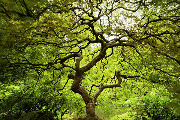 Wall Art - Photograph - Trees In Japanese Garden, Portland by Panoramic Images