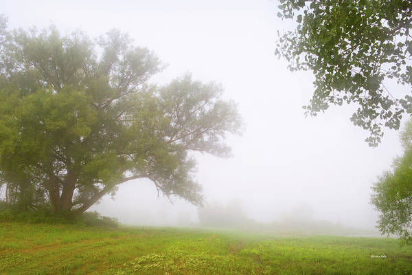 Photograph - Trees In Morning Fog by Christina Rollo