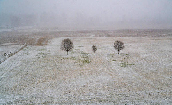 Photograph - Trees In Snowstorm by Tom Romeo