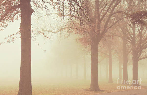 Photograph - Trees In The Fog by Pam  Holdsworth