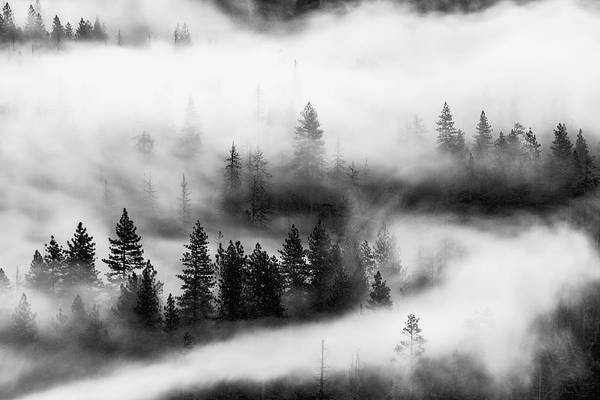 Photograph - Trees In The Mist 2 by Stephen Holst