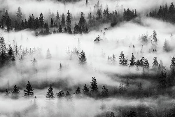 Photograph - Trees In The Mist 3 by Stephen Holst