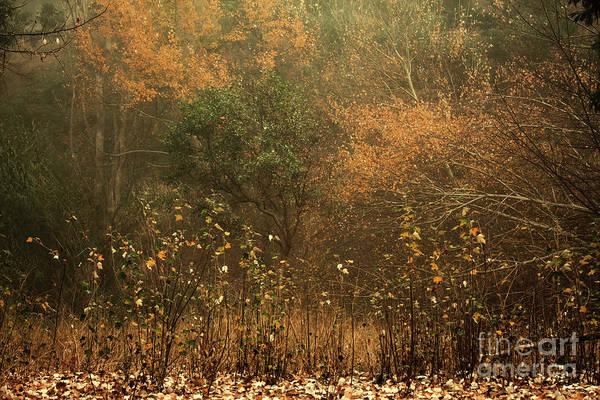 Photograph - Trees In The Mist by Elaine Teague