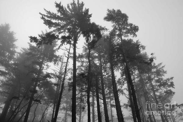 Photograph - Trees In The Mist by Jeni Gray