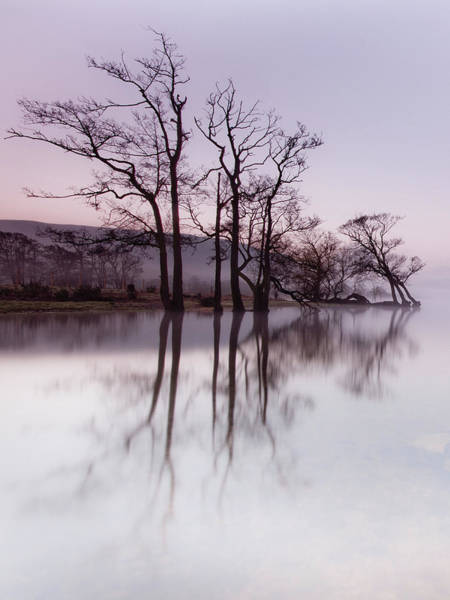 Ullswater Photograph - Trees In The Mist On Lake Ullswater by Anita Nicholson