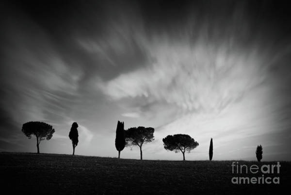 Wall Art - Photograph - Trees In Tuscany, Black And White by Delphimages Photo Creations