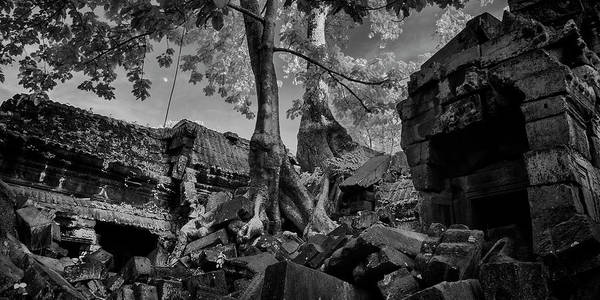Wall Art - Photograph - Trees Inside An Ancient Temple, Preah by Panoramic Images