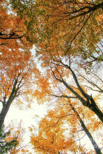 Photograph - Trees Looking Up by Jim Lepard