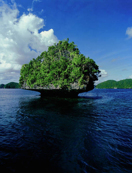 Wall Art - Photograph - Trees On An Island In The Pacific by Panoramic Images