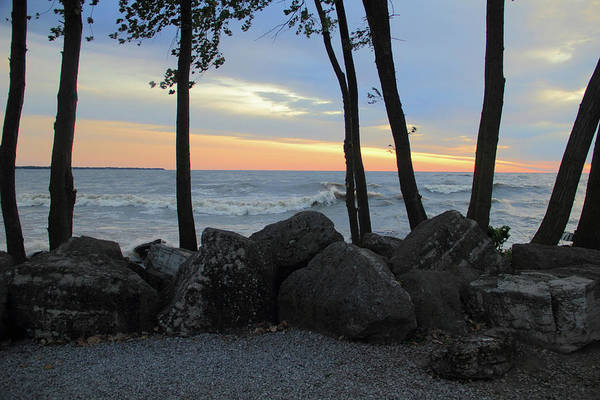Photograph - Trees On The Shore by Angela Murdock