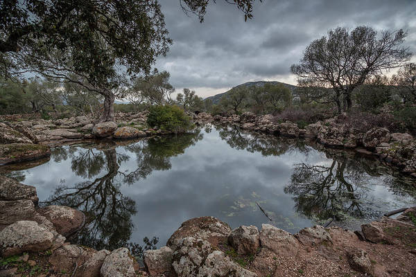 Photograph - Trees Reflected In A Body Of Water by Daniele Fanni