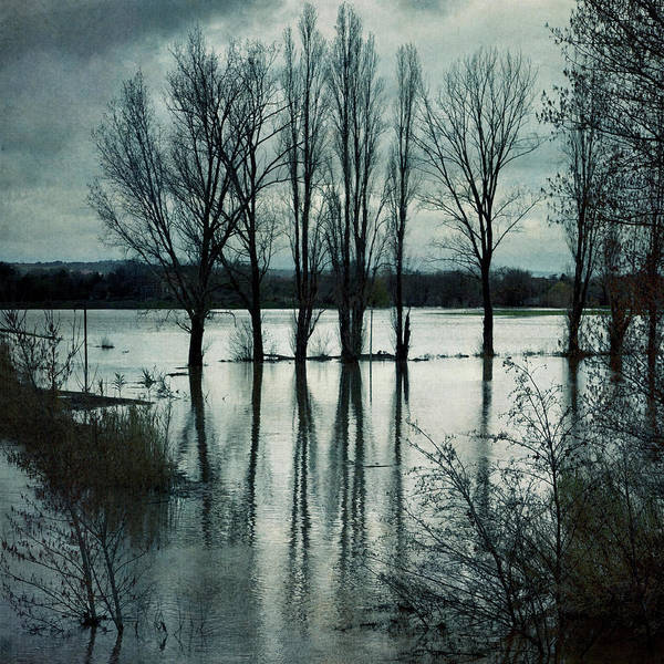 Environmental Issue Wall Art - Photograph - Trees Reflected In Floodwater by Paul Grand Image