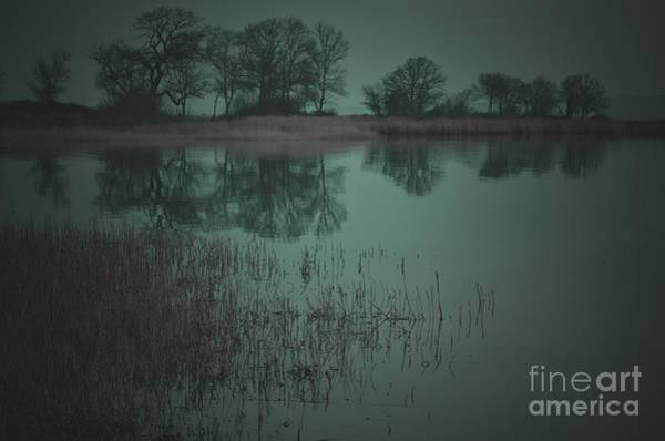 Wall Art - Photograph - Trees Reflecting In Tranquil Lake by Onur Güner Güray