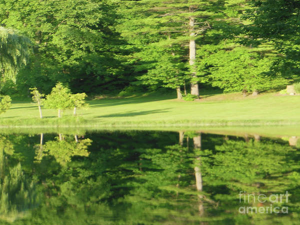 Photograph - Trees Reflections by Rockin Docks