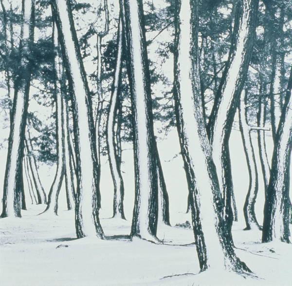 Wall Art - Photograph - Trees Shiga by Panoramic Images