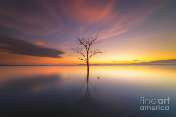 Wall Art - Photograph - Trees Submerged In The Flooded The Time by Worawit j