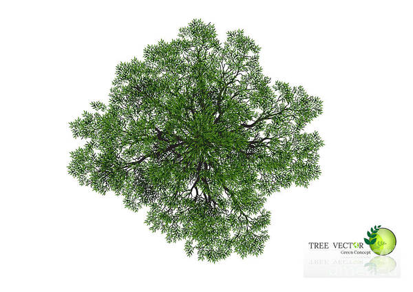 Wall Art - Digital Art - Trees Top View For Landscape Vector by Nikhomtreevector