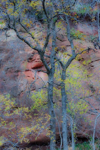 Wall Art - Photograph - Trees With Autumn Leaves Along Oak by Darrell Gulin