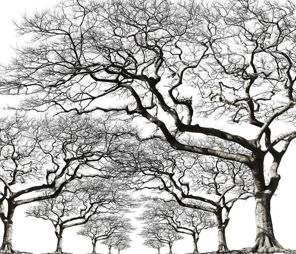 Photograph - Trees With No Leaf by Kazunori Nagashima
