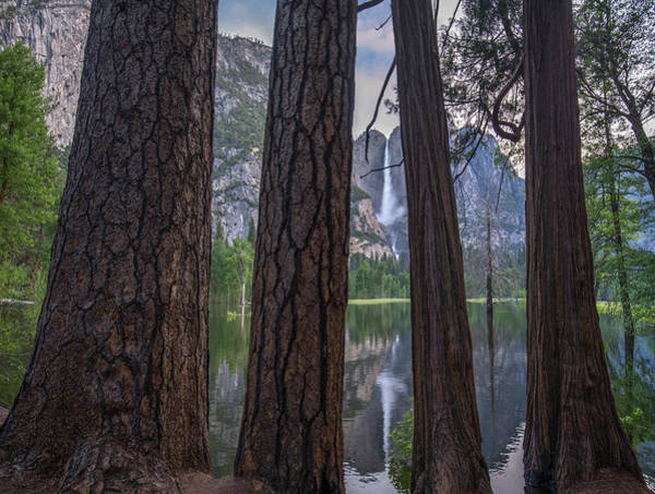 Photograph - Trees With Yosemite Falls Reflected by
