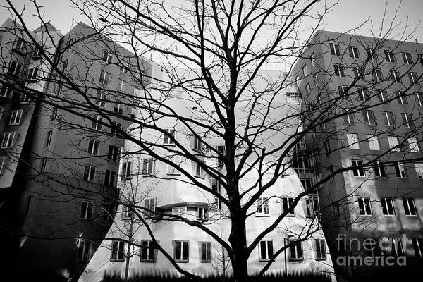 Photograph - Trees Without Leaves In Winter In The City, Black And White Photo. by Joaquin Corbalan