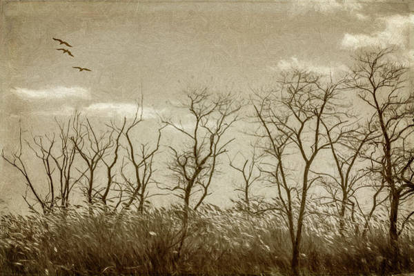 Photograph - Treescape In Sepia by Cathy Kovarik