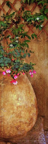 Wall Art - Photograph - Trellis - Urn - Fuchsia by Nikolyn McDonald