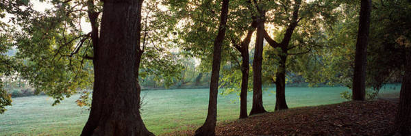 Wall Art - Photograph - Tress On The Edge Of Field, Arkansas by Panoramic Images
