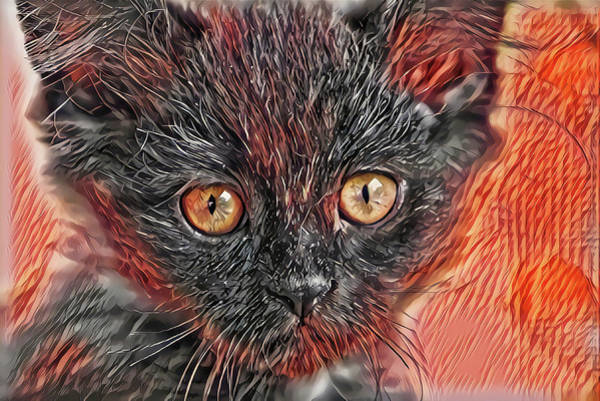 Digital Art - Triangle Face Kitten by Don Northup