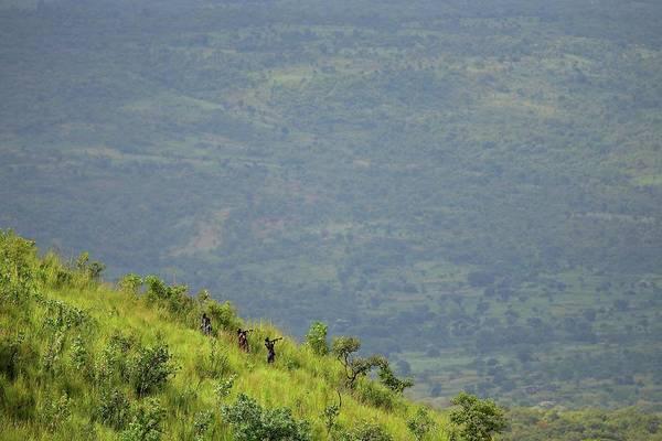 Rifle Photograph - Tribesmen Climb Grassland Mountain by Timothy Allen