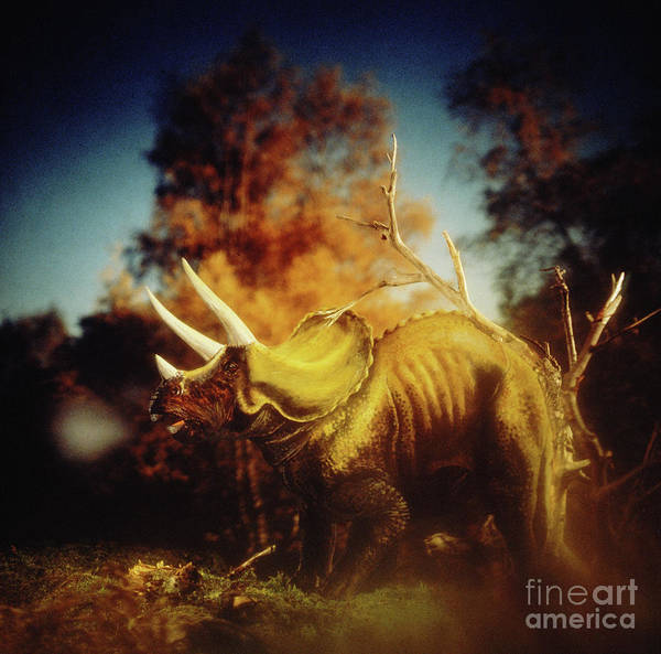 Photograph - Triceratops by Warren Photographic