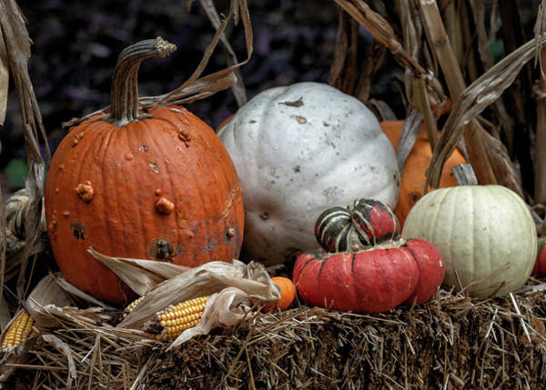 Pumkin Wall Art - Photograph - Trick Or Treat by James Barber