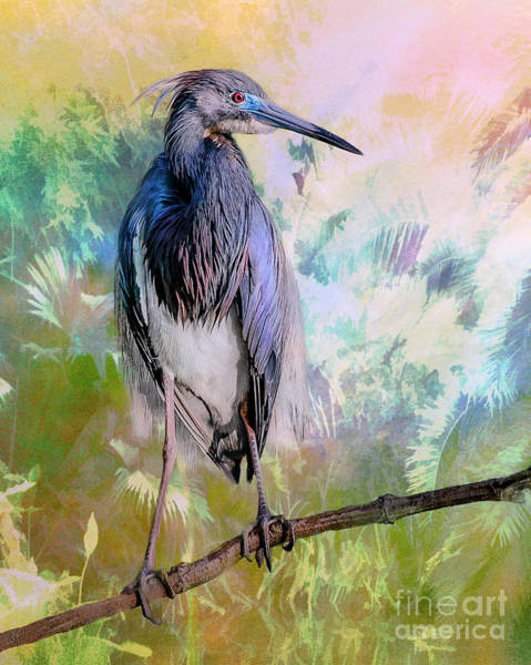 Photograph - Tricolored Heron by Brian Tarr