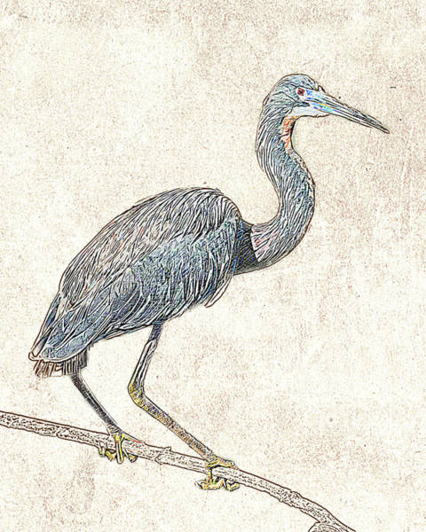 Photograph - Tricolored Heron - Photographic Drawing by Dawn Currie