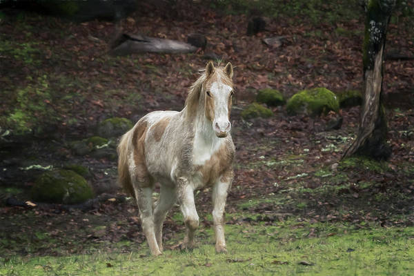 Photograph - Tripper Coming To Greet Me by Belinda Greb