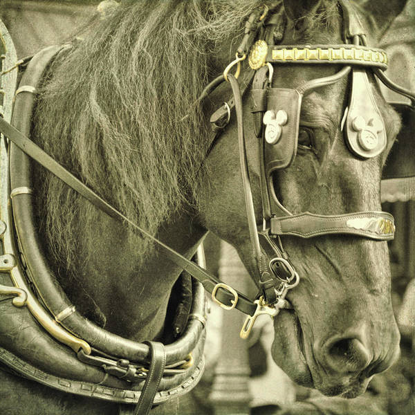 Photograph - Trolley Horse by Jamart Photography