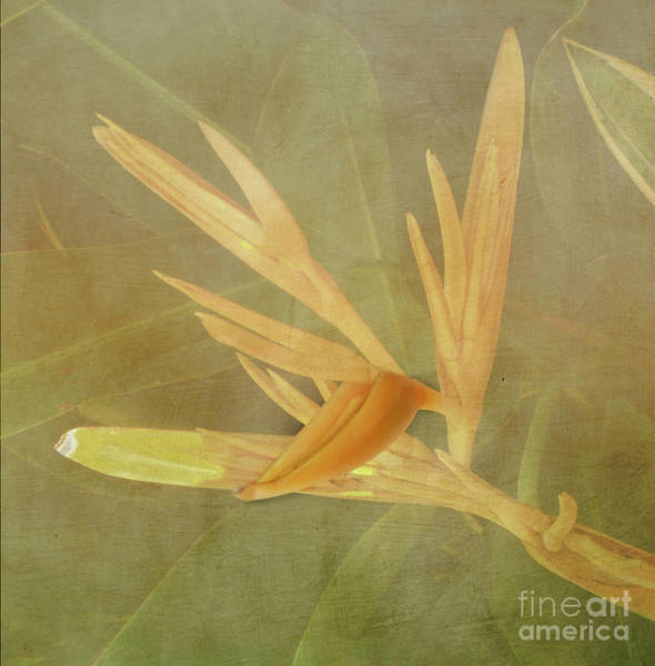 Photograph - Tropical Bird Of Paradise by Judy Hall-Folde