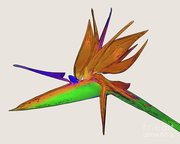 Digital Art - Tropical Bird Of Paradise Watercolor by Kirt Tisdale