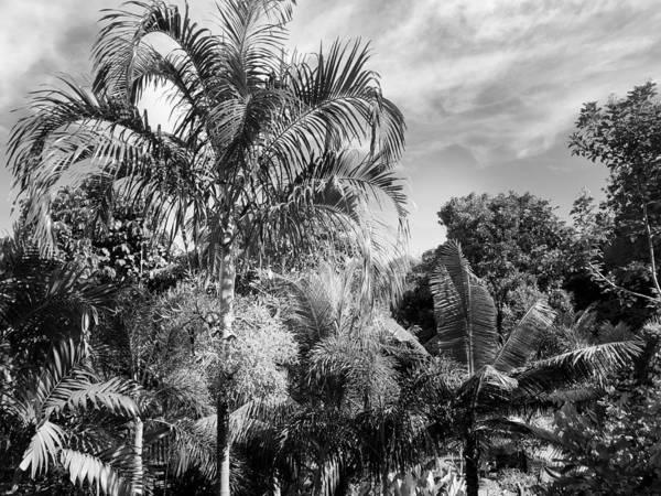 Photograph - Tropical Botanicals by Georgia Fowler