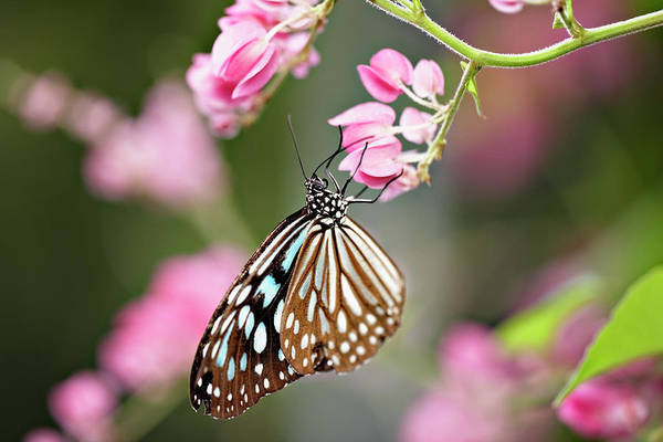 Tropical Butterfly On Flower, Close-up Art Print