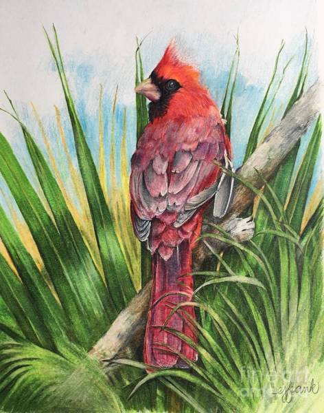 Red Cardinal Drawing - Tropical Cardinal by Betsy Frank