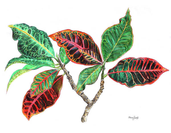 Garden Wall Drawing - Tropical Croton by Akosua Sankofa
